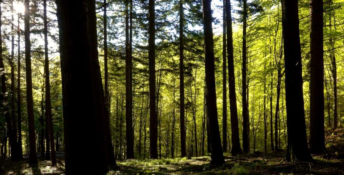 forest_bkg_1